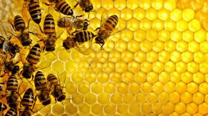 فوائد وضع العسل على السرة