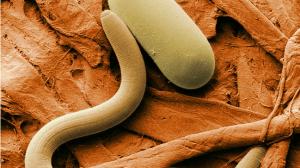 دليلك المبسط عن علاج الديدان وأنواعه الديدان