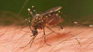 الناموس (البعوض) فوائد قرصه – أضراره - لماذا يقرص الإنسان.. والكثير