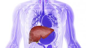 أسباب ارتفاع إنزيمات الكبد وبعض النصائح الهامة