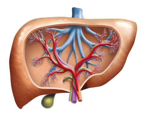 أعراض نقص وارتفاع انزيمات الكبد