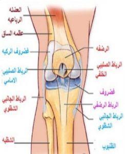 تعد الركبة أكبر مفصل في جسم الإنسان
