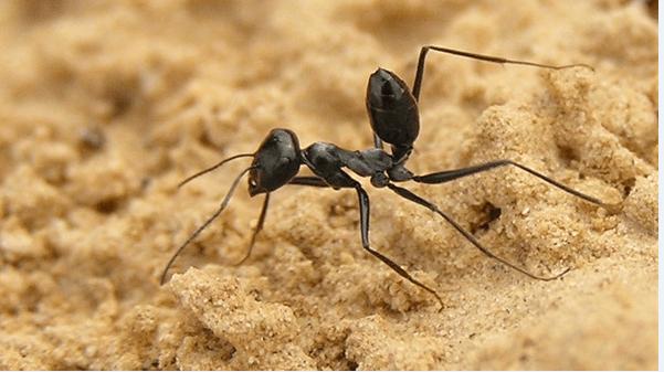 قصة سليمان والنملة