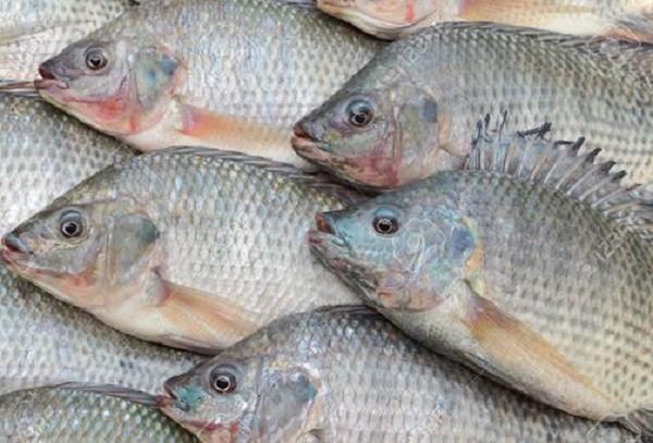 تفسير السمك في الحلم للنابلسي