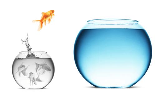 النجاح يستحق المخاطرة