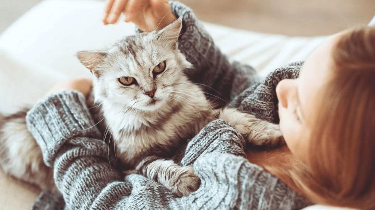 ملف كامل عن تربية القطط