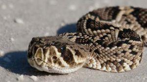 قائمة من أخطر الثعابين في العالم