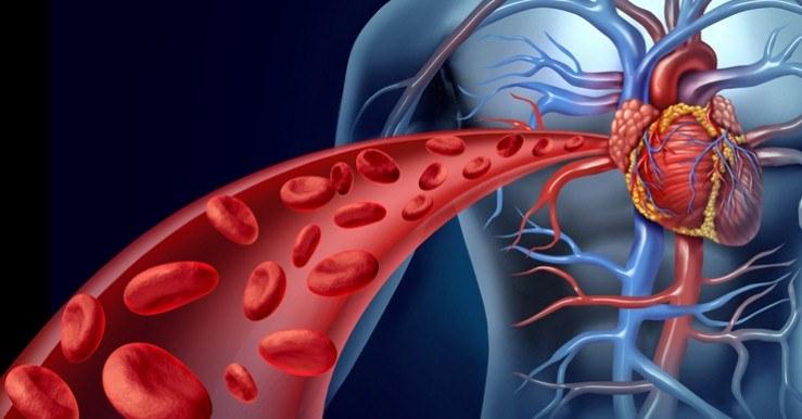 طرق تحسين الدورة الدموية وزيادة نشاط الدم في الجسم