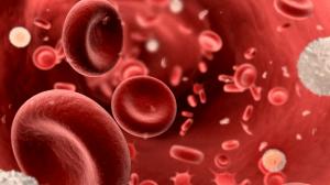 فصيلة الدم O سالب