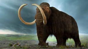 فيل الماموث