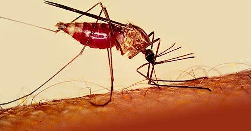 ما هي الملاريا؟