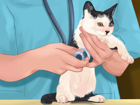 التطعيمات الخاصة بالقطط