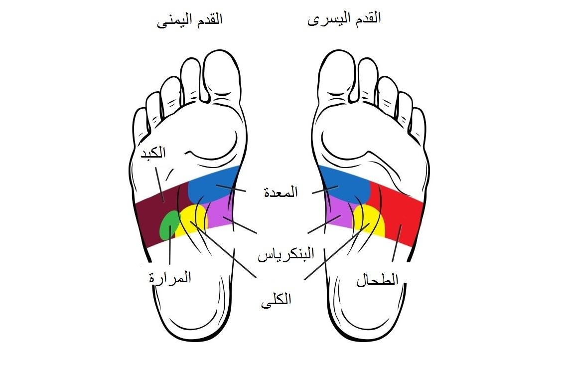 تحديد بعض النقاط التي تمثل أعضاء الجسم بباطن القدم