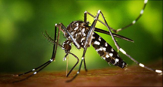 فيروس زيكا البعوض الزاعج