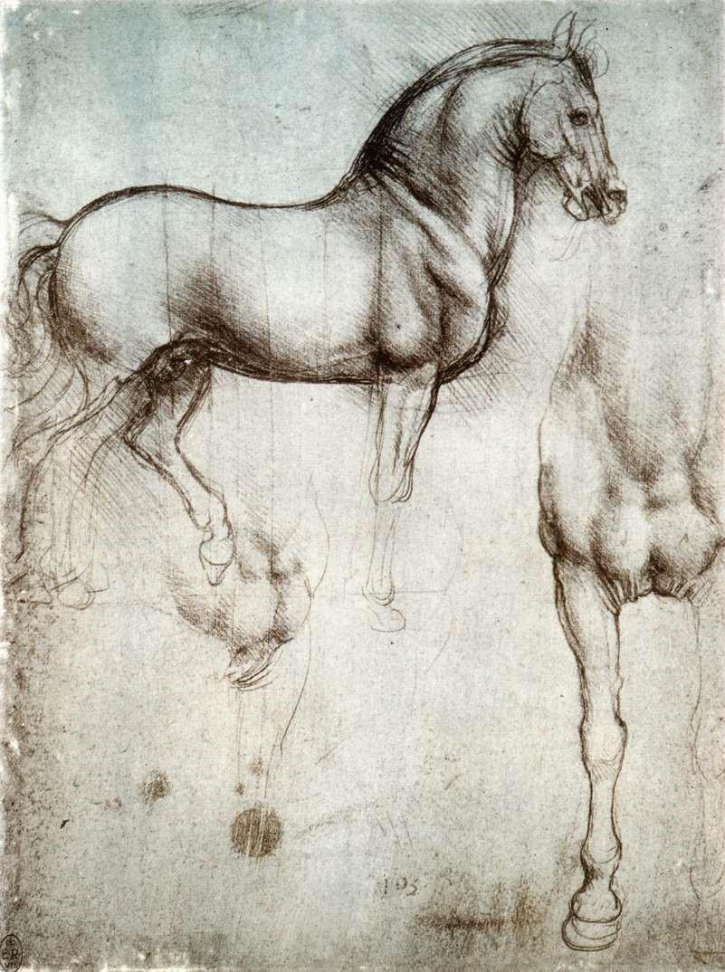 رسم توضيحي لعضلات الحصان في لوحة تشريحية