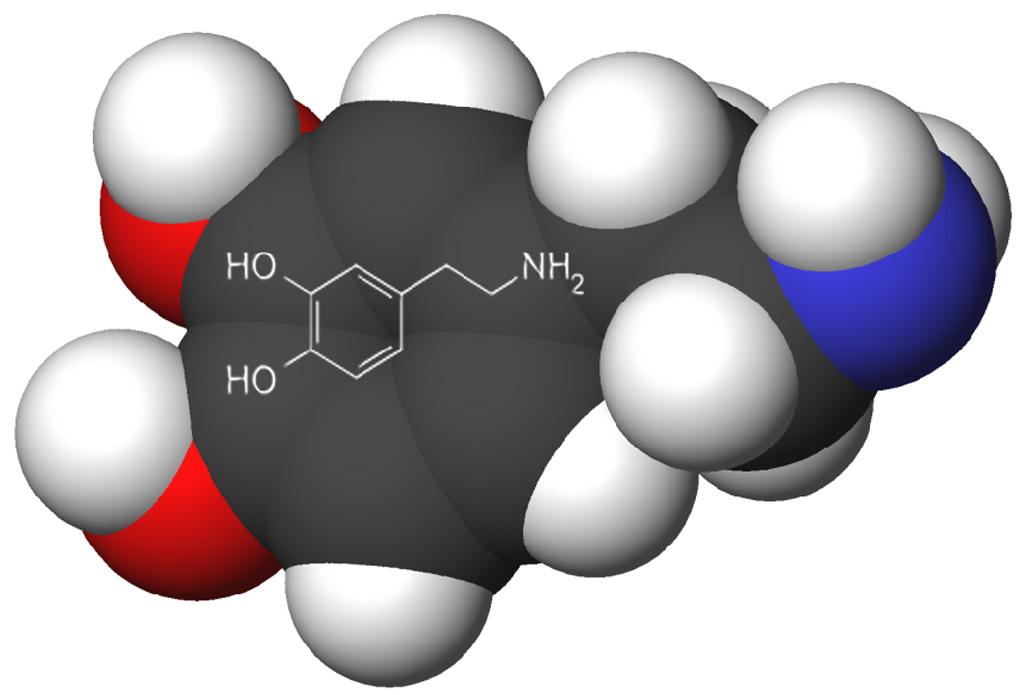 معلومات لا بد وأن تعرفها عن هرمون الدوبامين