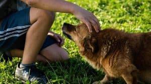 كيفية التغلب على فوبيا الكلاب دون اللجوء لمعالج نفسي