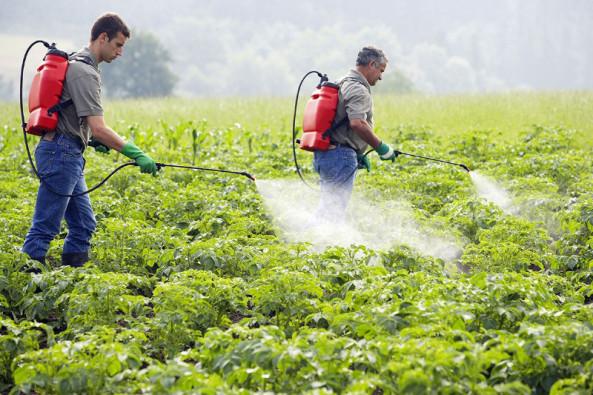 استخدام المبيدات الحشرية والفطرية