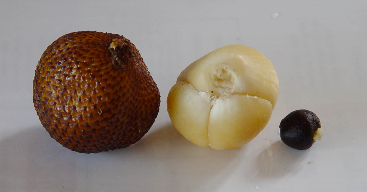 أغرب أنواع الفاكهة