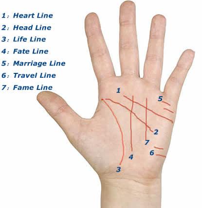 الخطوط الرئيسية في راحة اليد