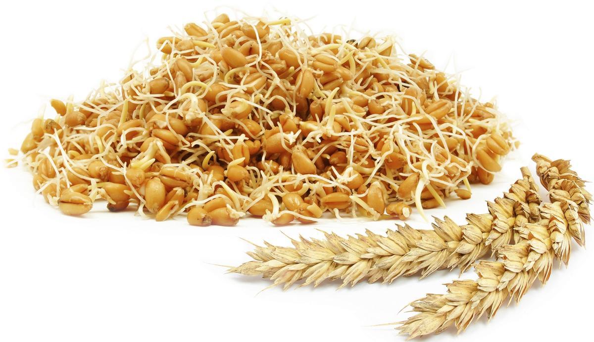 كيفية الحصول على جنين القمح