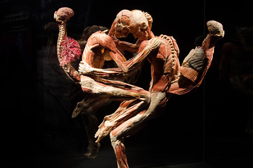 متحف الجينوم البشري