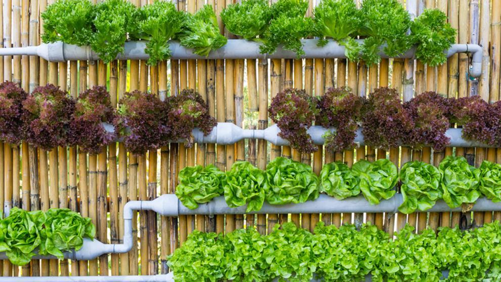 الزراعة المائية في المنزل
