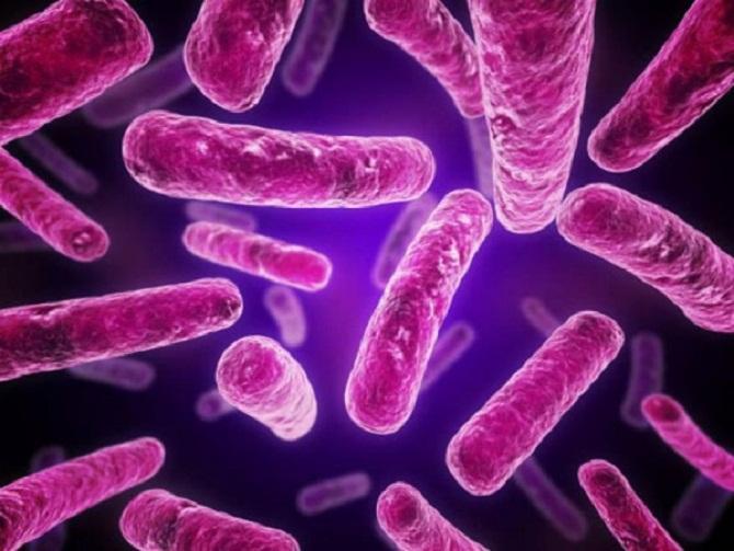 العمليات الفيزيولوجية للبكتريا
