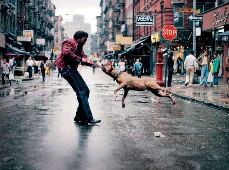 الصور هي 15 من أكثر أنواع التصوير شعبية وشعبية