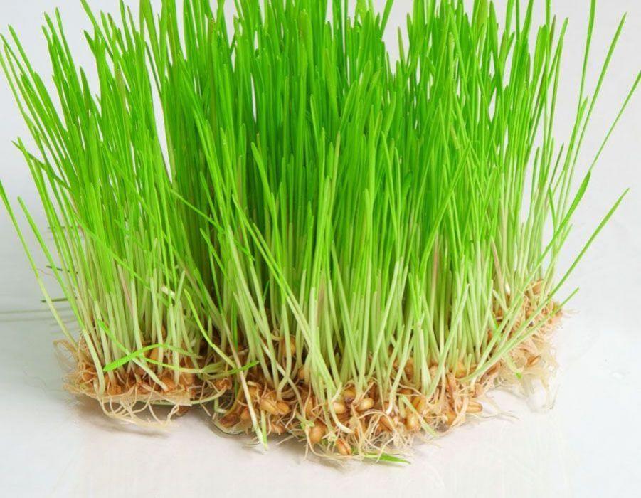 علاج تسوس الأسنان بالأعشاب