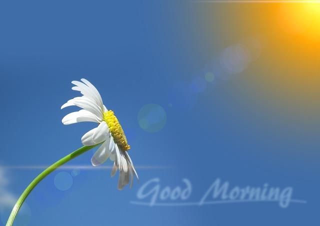 اختر لكلمة صباح الخير مسجات عديدة تراسل بها من تحب