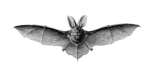 الخفاش طائر من الثدييات