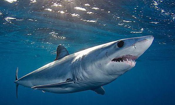 كل ما تريد معرفته عن سمك القرش مجلتك