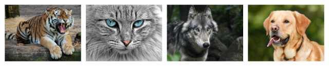 صورة لأربعة حيوانات: قطة ، نمر ، كلب ، ذئب