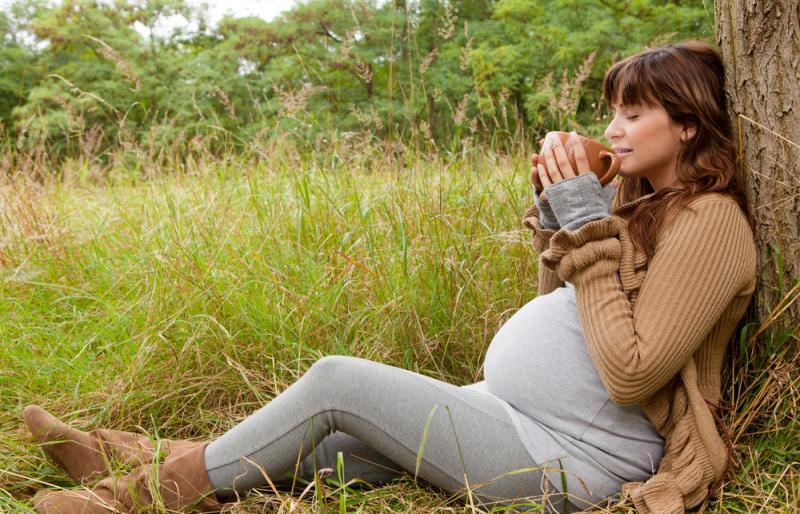 فوائد وأضرار الزعتر للحامل مجلتك