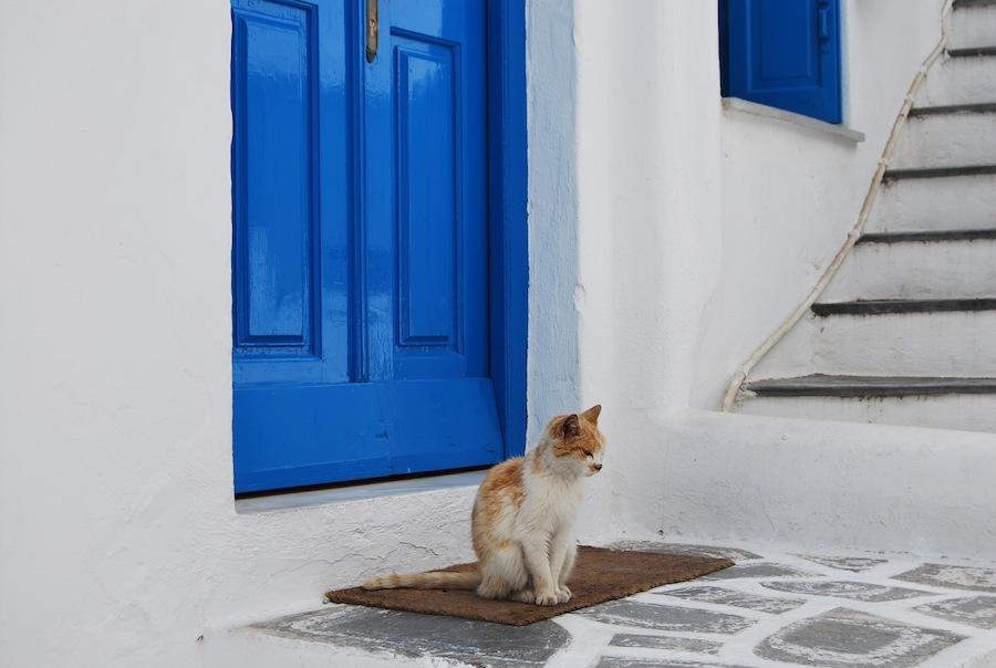 واحدة من الشوارع المرصوفة بالحصى في جزيرة ميكونوس اليونانية، المنازل البيضاء مع الأبواب والشرفات الزرقاء.