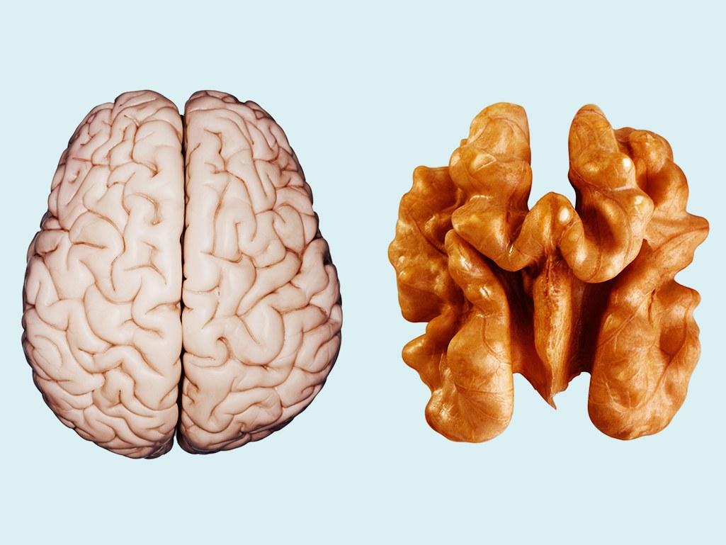 الجوز لصحة الدماغ