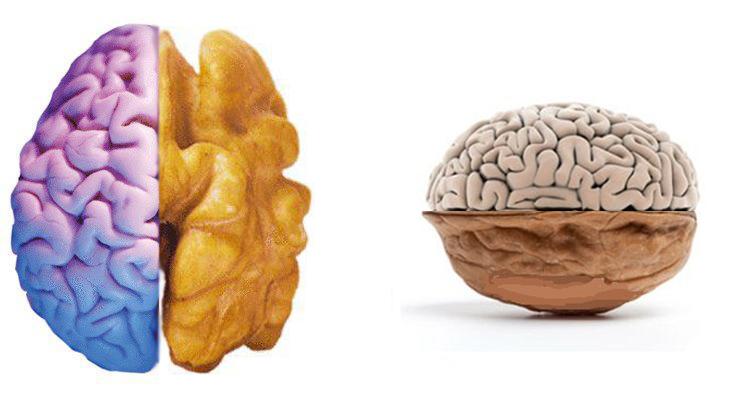 المكسرات والدماغ