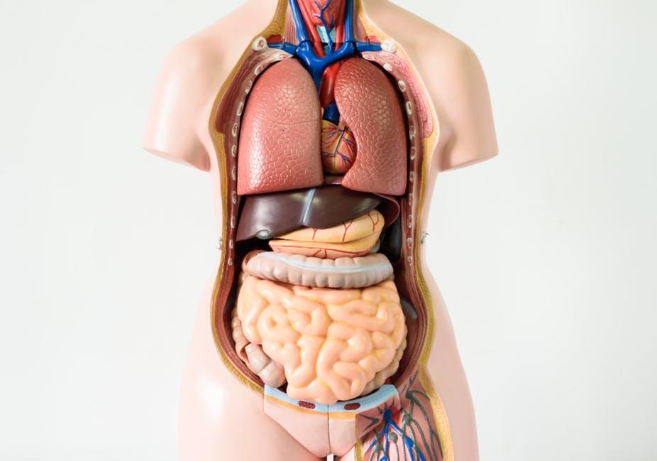 كم جهاز في جسم الإنسان