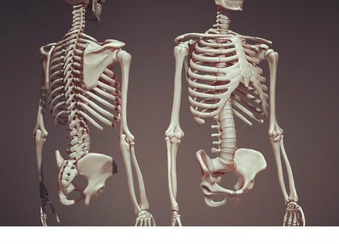 كيف يعمل الجسم البشري.. تعرف على الهيكل العظمي لدى الانسان