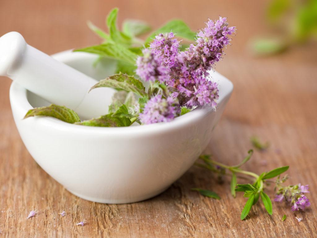 الأعشاب الطبية 1