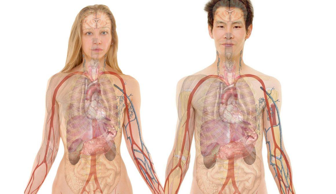 تشريح الجسم البشري