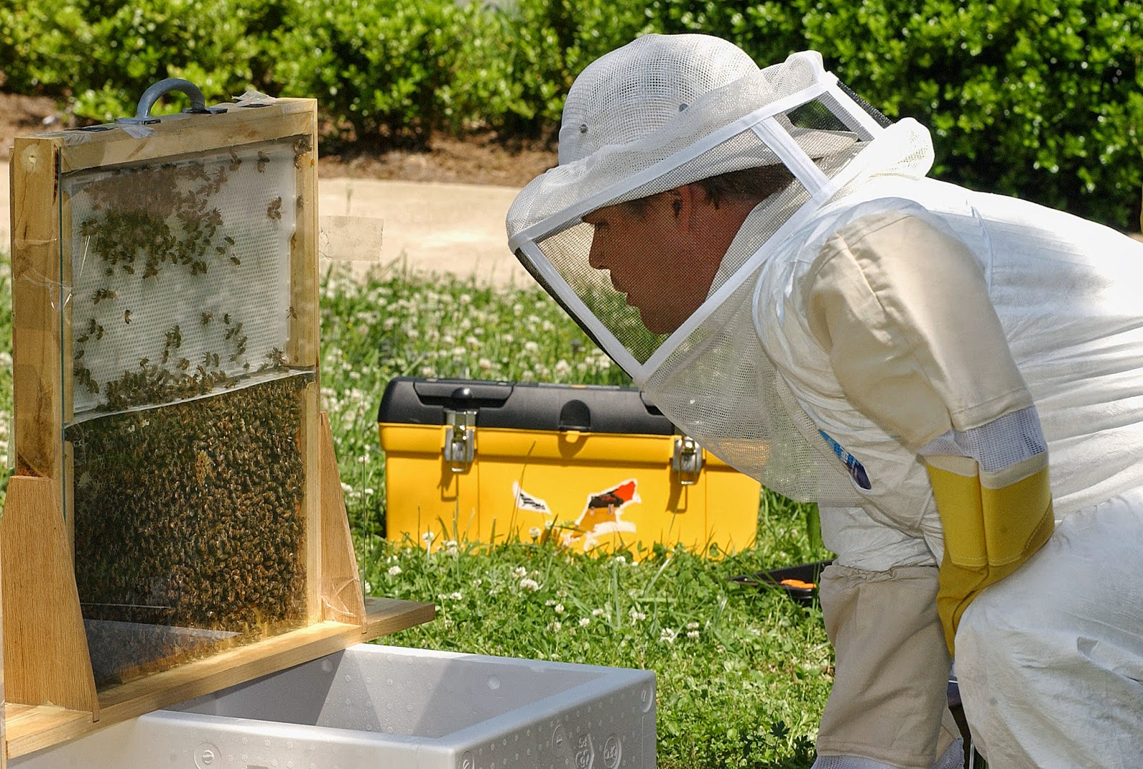 تغذية النحلات