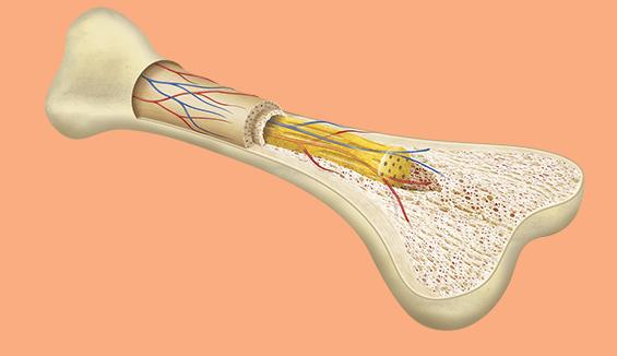 خطورة عملية زرع النخاع العظمي