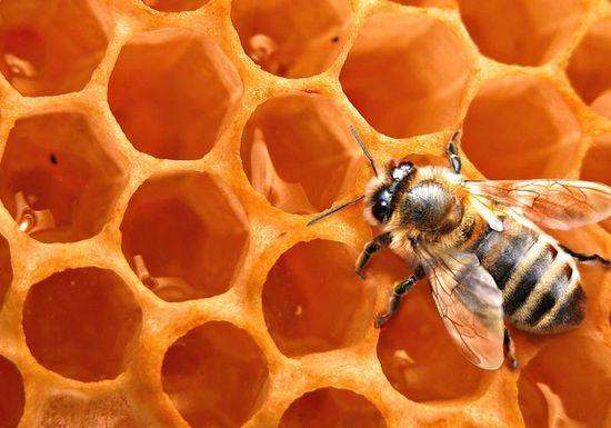 شمع النحل