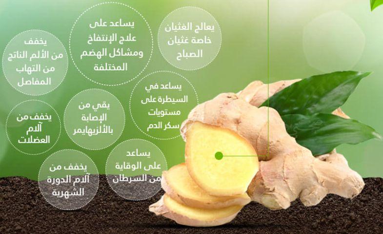 نبات الزنجبيل فوائد وأضرار