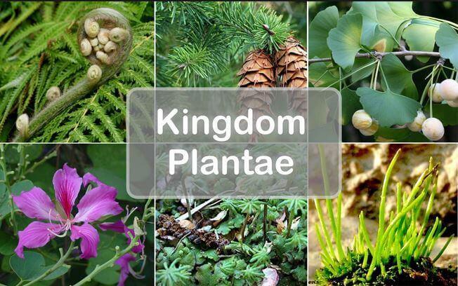 المملكة النباتية