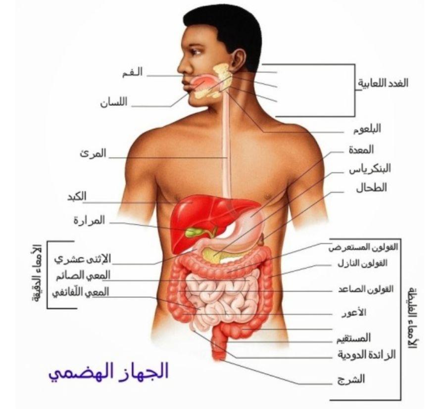 سلسلة كيف يعمل الجسم البشري