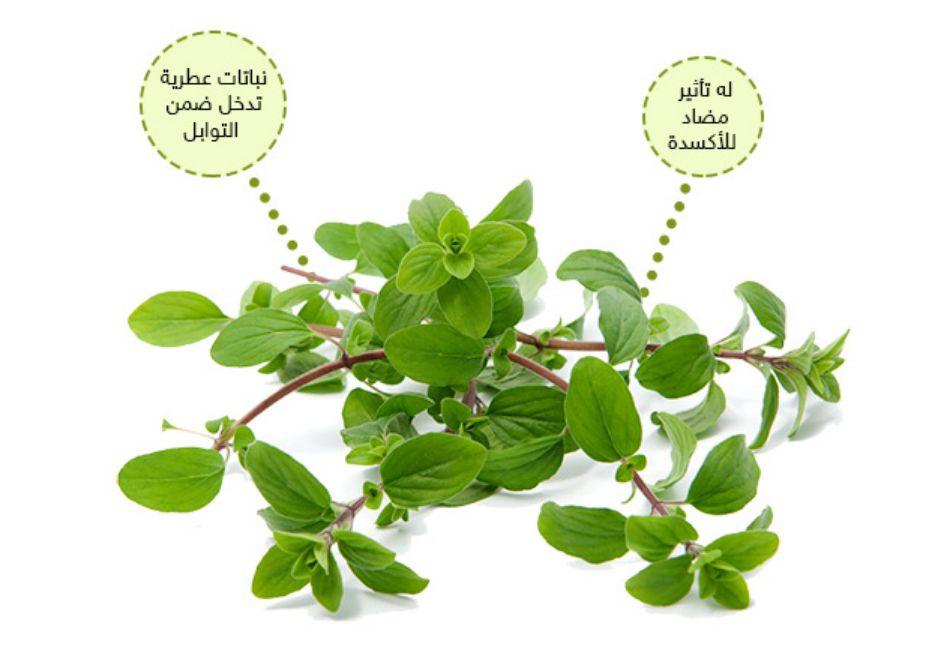 ما هو نبات البردقوش ... كل شيء عنه وما هي فوائده وأضراره