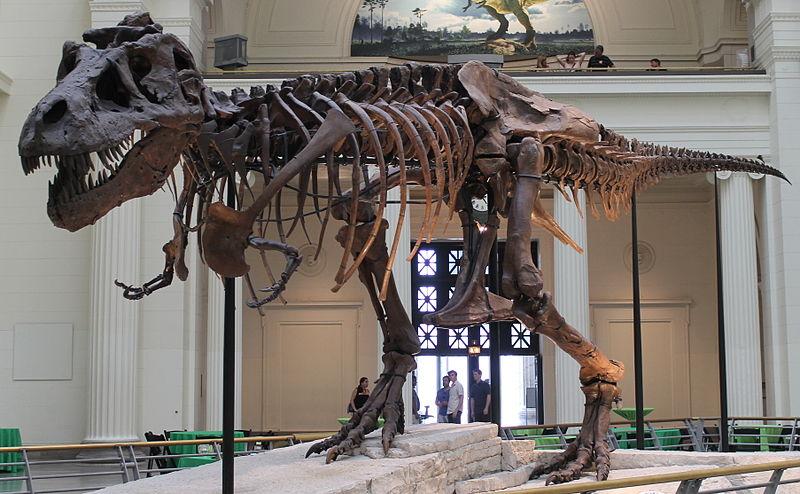 الهيكل العظمي الأكثر اكتمالا لديناصور تايركس - شيكاغو - الولايات المتحدة الأمريكية